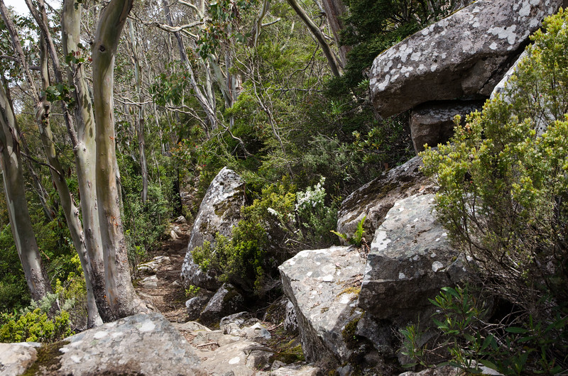 Best Mt Wellington walks - Beautiful boulders line the walk