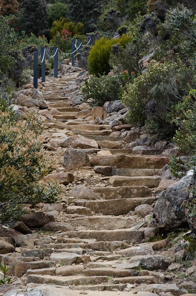 Best Mt Wellington walks - the Zig Zag trail