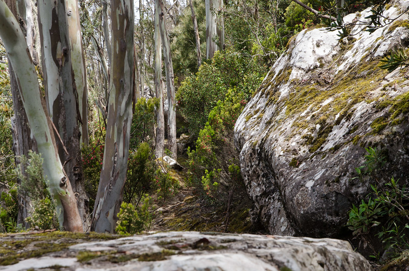 Best Mt Wellington walks
